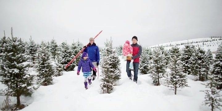 picking a christmas tree