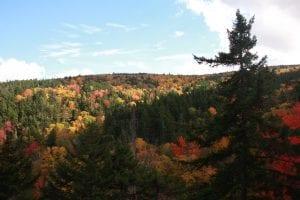 Fall leaves - NH