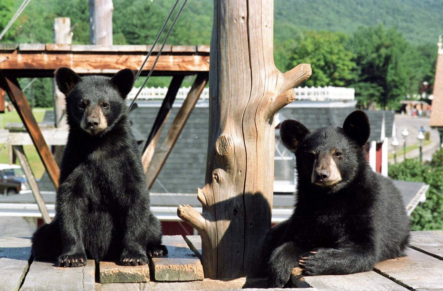clark trained bears