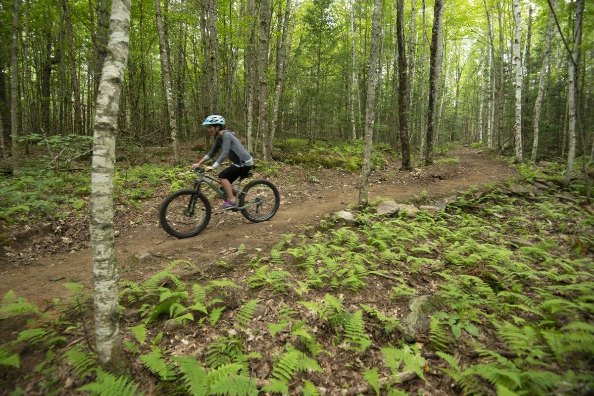 Biking in the Western White Mountains